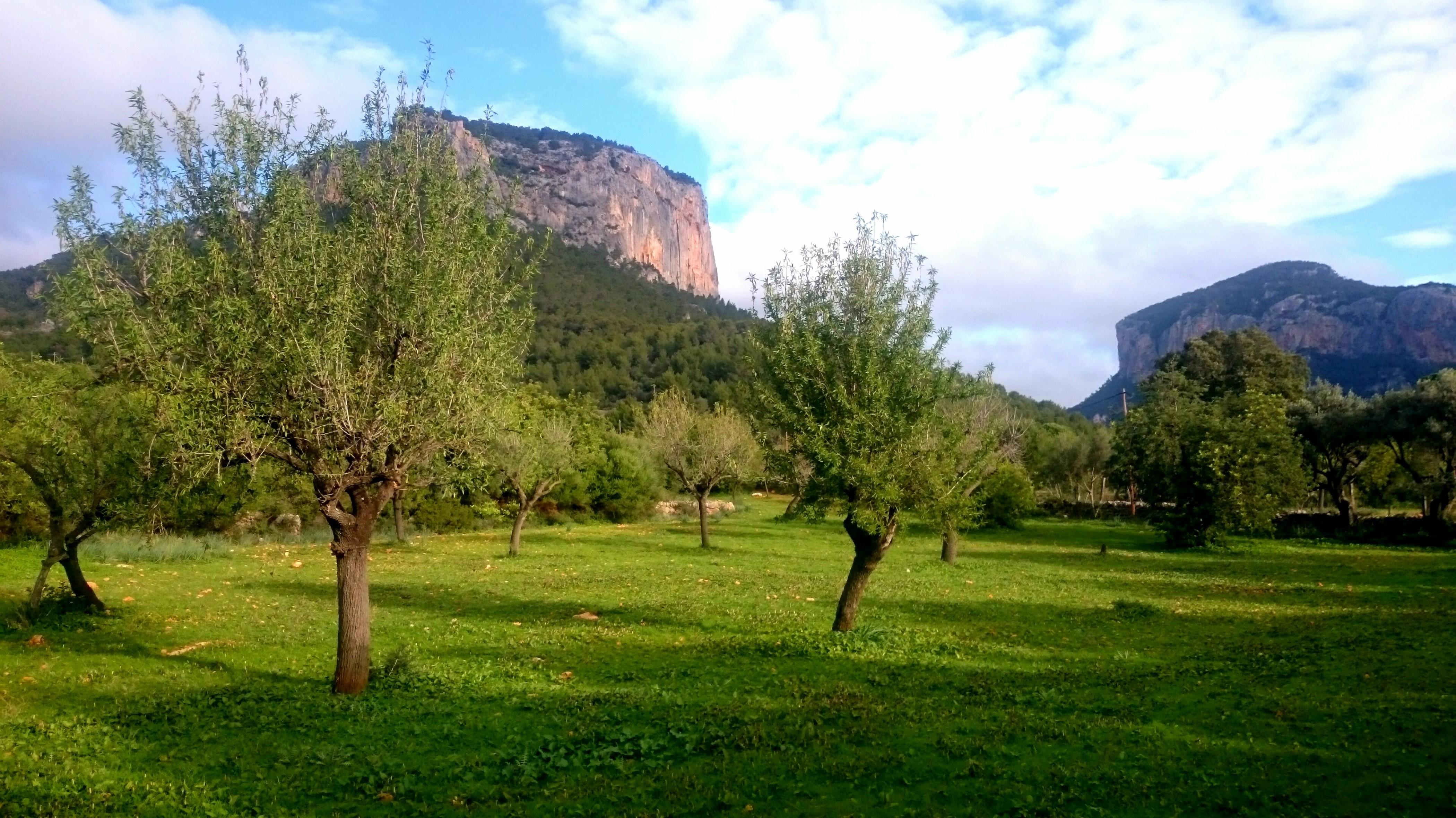 Maison de vacances CA NA CARME (ALARONERA) (2382858), Alaro, Majorque, Iles Baléares, Espagne, image 28