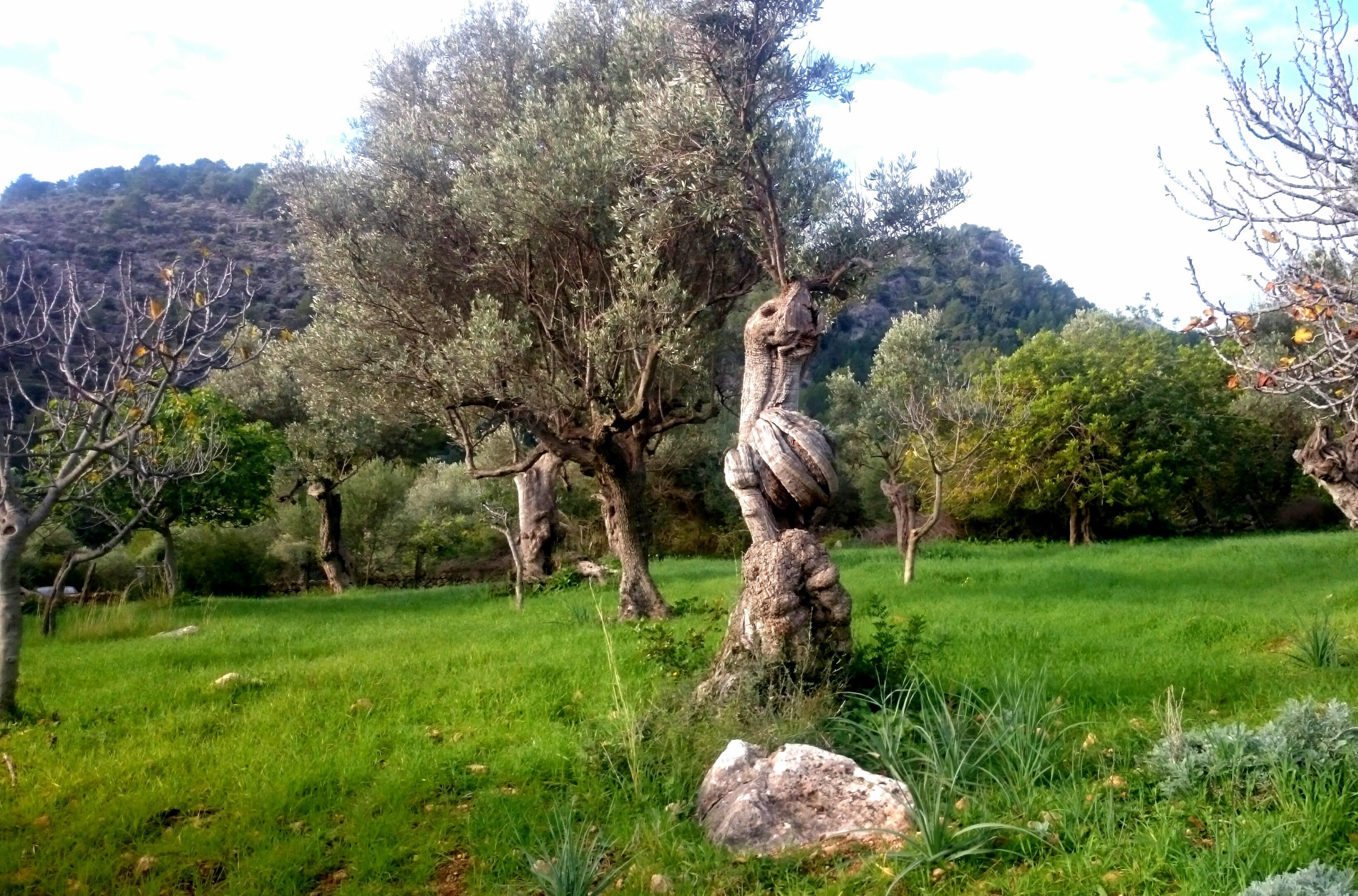 Maison de vacances CA NA CARME (ALARONERA) (2382858), Alaro, Majorque, Iles Baléares, Espagne, image 29